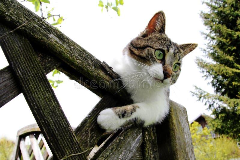 Eine junge Katze auf dem Zaun lizenzfreie stockfotos