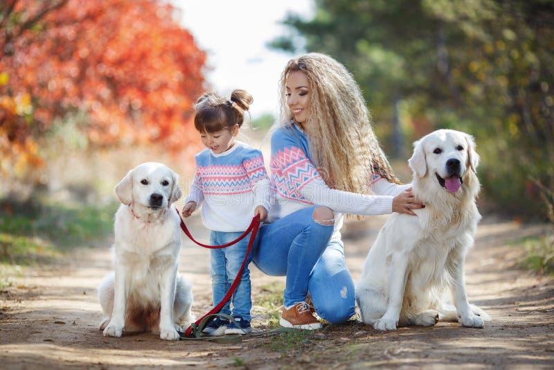 Eine junge Mutter mit einem kleinen Mädchen und zwei Hunden auf einem Weg im Park im Herbst stockbild