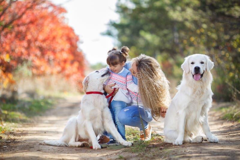 Eine junge Mutter mit einem kleinen Mädchen und zwei Hunden auf einem Weg im Park im Herbst lizenzfreies stockfoto