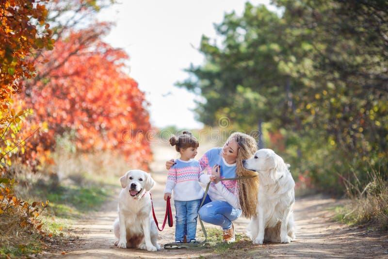 Eine junge Mutter mit einem kleinen Mädchen und zwei Hunden auf einem Weg im Park im Herbst lizenzfreie stockfotos