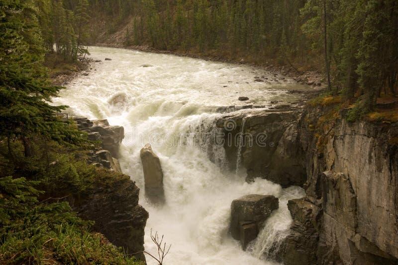 Eine Kaskade des Wassers an Yellowstone-Park lizenzfreie stockfotos
