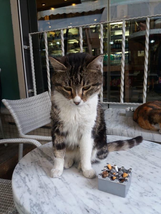 Eine Katze lizenzfreies stockfoto