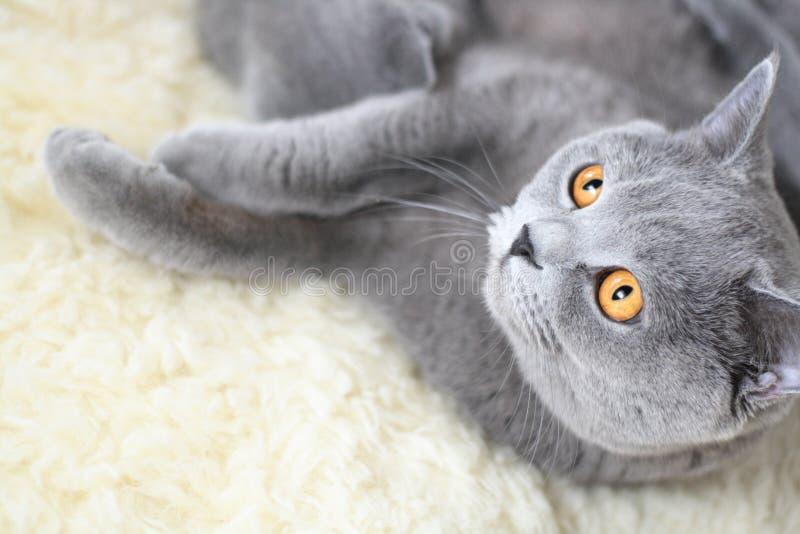 Eine Katze stockfoto