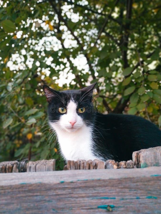 Eine Katze auf der Jagd vor Angriff stockbilder
