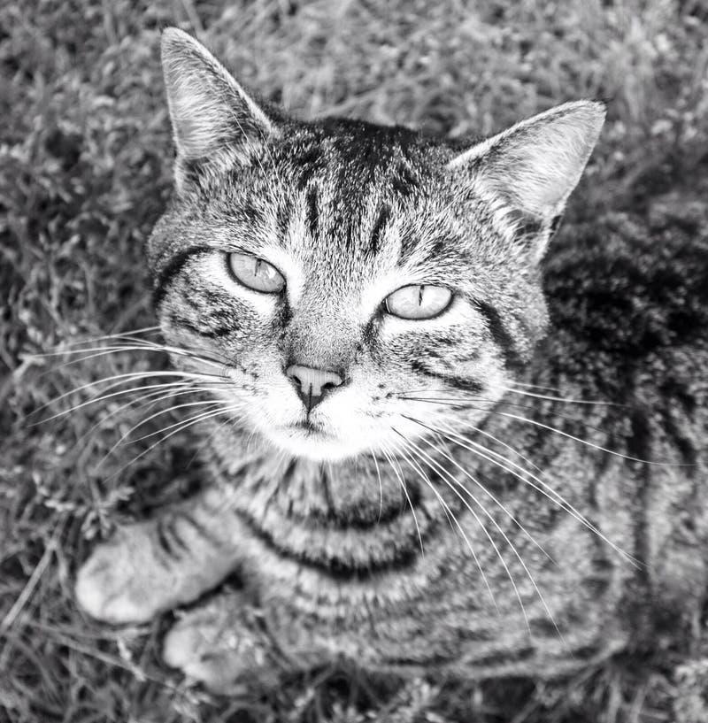 Eine Katze der getigerten Katze lizenzfreie stockbilder
