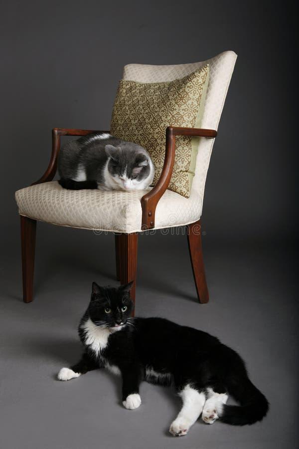 Eine Katze der Katze zwei stockbilder