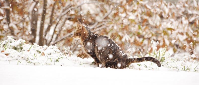 Eine Katze, die den Schnee genießt lizenzfreies stockfoto