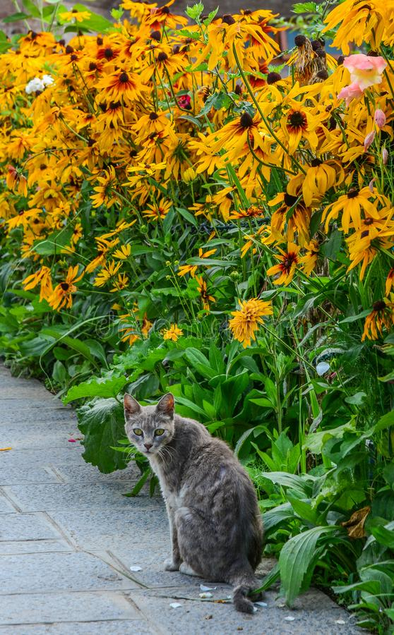 Eine Katze, die am Gänseblümchenblumengarten spielt lizenzfreie stockfotos