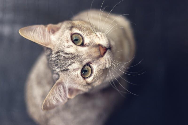 Eine Katze, die oben Kamera betrachtet stockfotografie