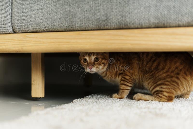 Eine Katze, die unter einer Couch sich versteckt lizenzfreie stockbilder