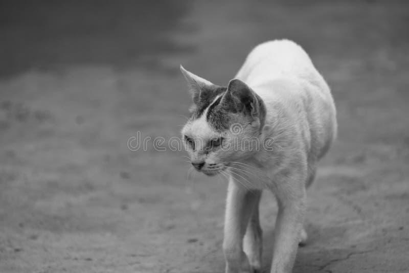 Eine Katze geht auf einen ländlichen Weg lizenzfreies stockfoto