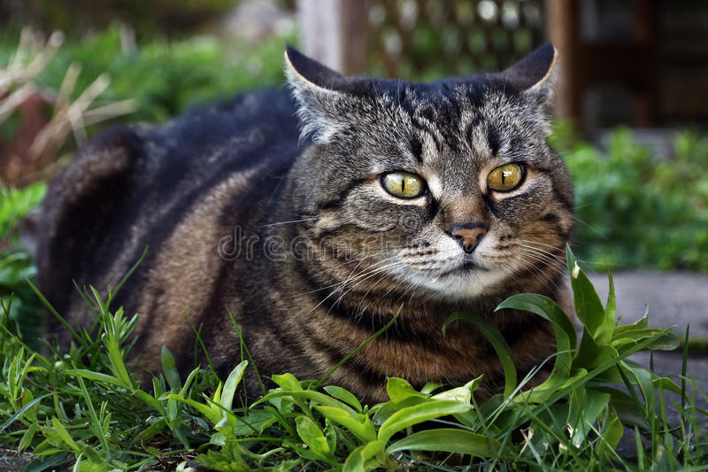 Eine Katze kurz vor dem Angriff stockbilder