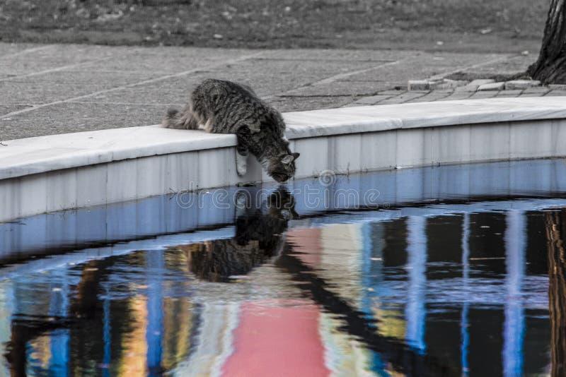 Eine Katze mackarel der getigerten Katze mit langem Pelz in einem sonderbaren Leben trinkt Wasser von einem Pool des Lebens lizenzfreies stockfoto