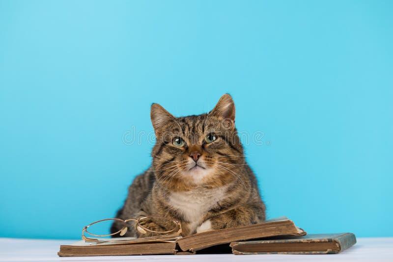 Eine Katze mit Gläsern sitzt nahe einem offenen Buch stockfoto