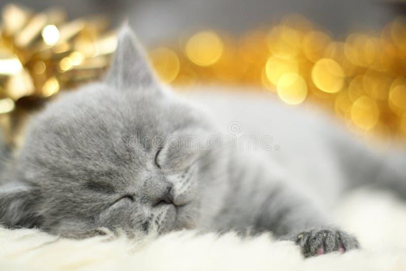 Eine Katze schläft lizenzfreie stockfotos