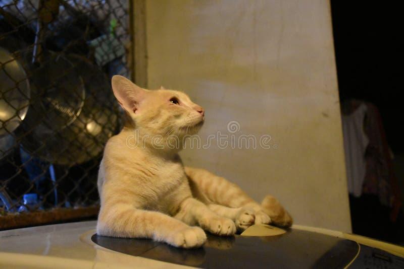 Eine Katze sitzt auf Waschmaschine stockbild