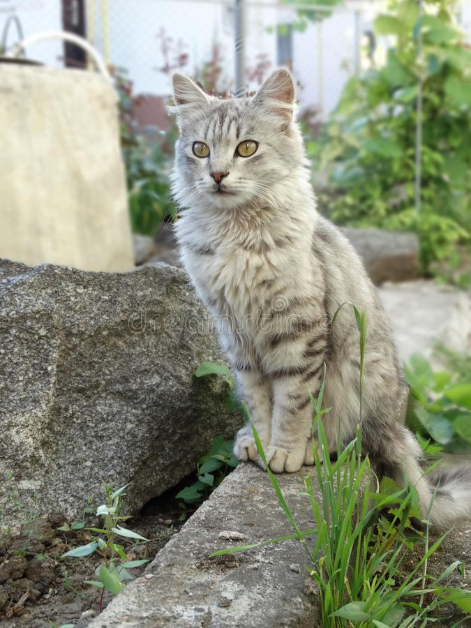 Eine Katze sitzt im Yard lizenzfreie stockbilder