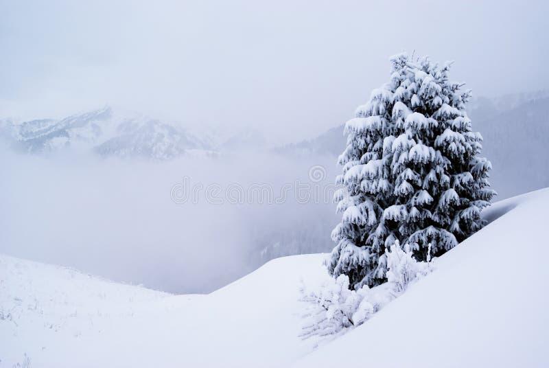 Eine Kiefer und Schnee lizenzfreies stockfoto