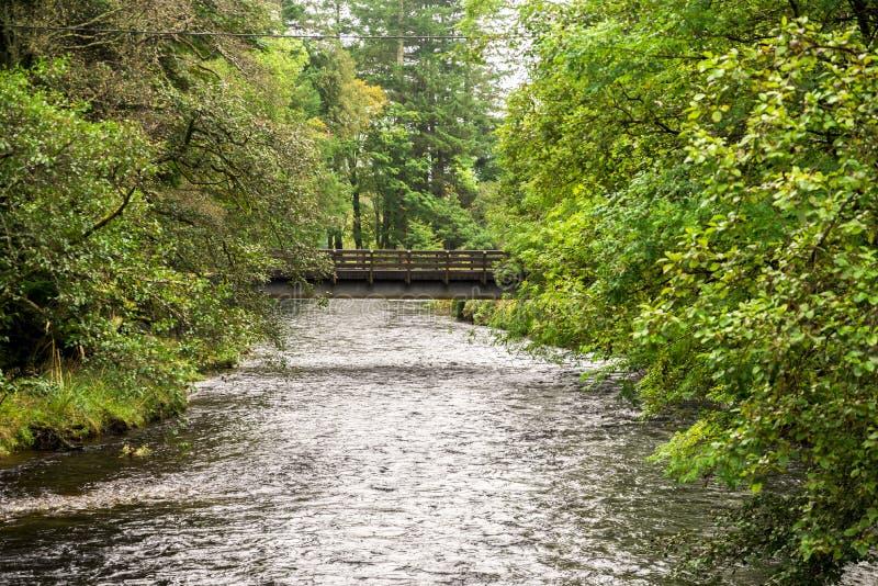 Eine kleine Fußgängerbrücke über Fluss Eachaig in botanischem Garten Benmore, Schottland lizenzfreies stockbild