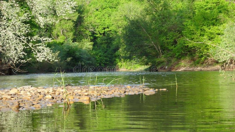 Eine kleine Insel des Steins in umgeben durch Wald mit grüner Olive im Wasser stockfoto