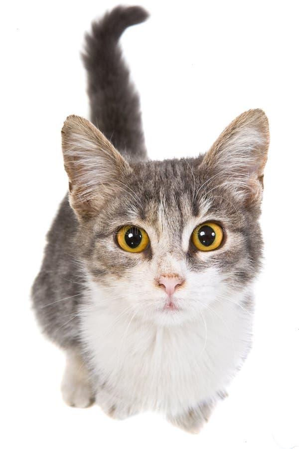 Eine kleine Katze stockfotos