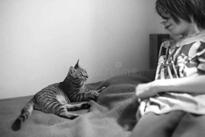 Eine kleine Katze stockbilder