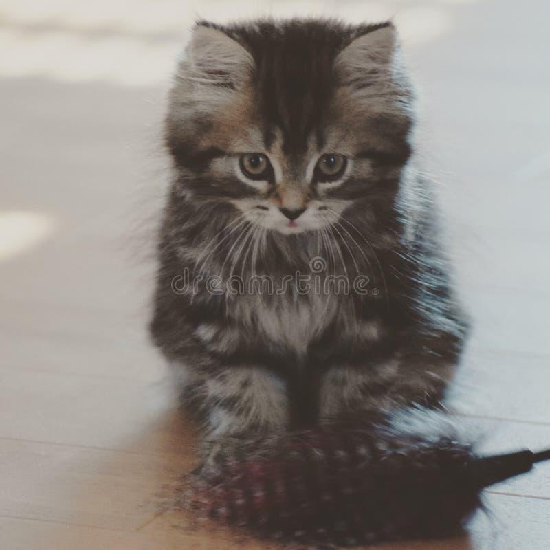 Eine kleine Katze lizenzfreie stockbilder