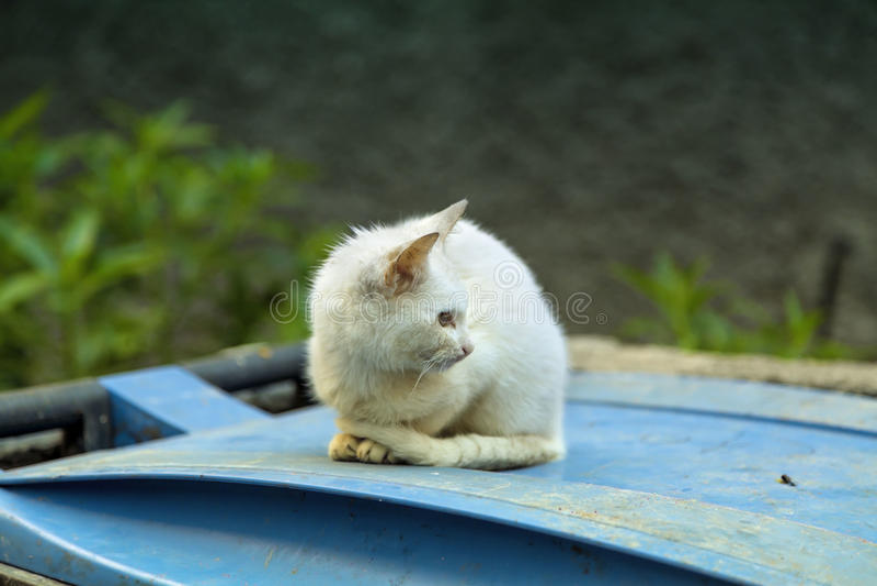 Eine kleine Katze sitzt auf einem blauen Mülleimer stockbild