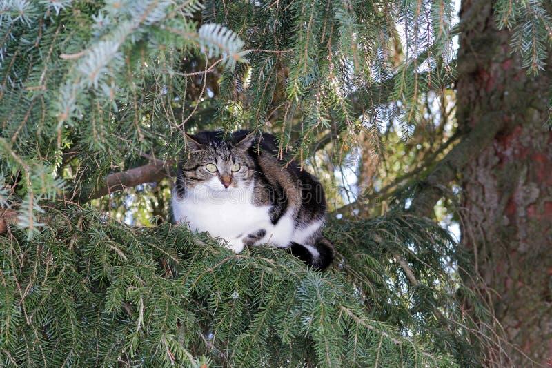 Eine kleine Katze sitzt hoch oben im Baum stockfotos