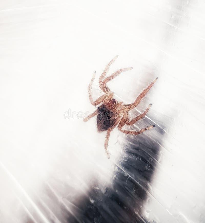 Eine kleine Spinne stockfotografie