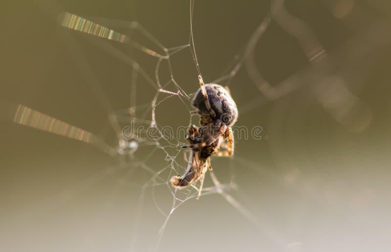 Eine kleine Spinne sitzt in der Mitte seines Netzes lizenzfreie stockfotografie