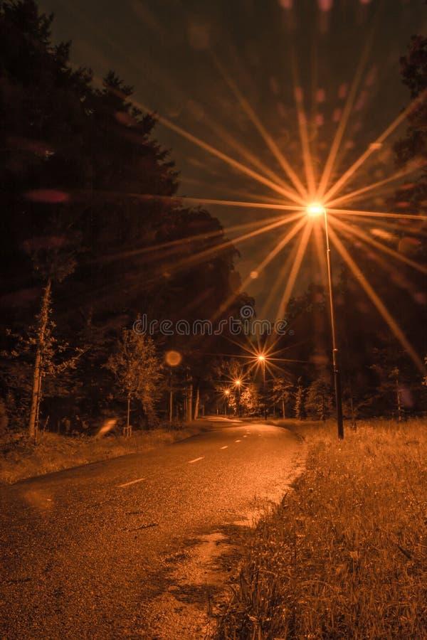 Eine kleine Straße in einem Wald beleuchtete durch Laternen lizenzfreies stockfoto