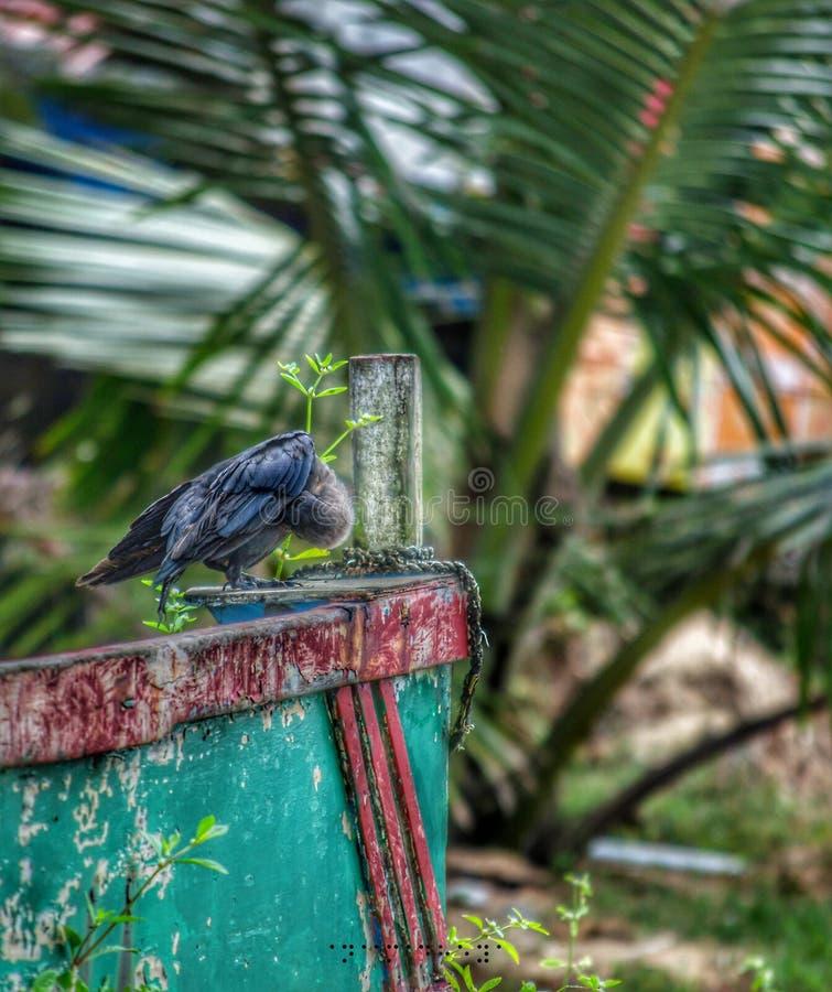 Eine Krähe lizenzfreies stockfoto