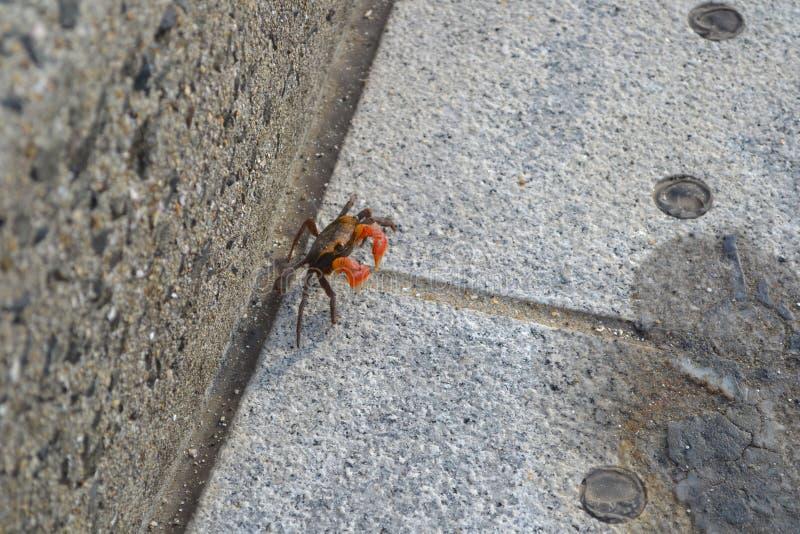 Eine Krabbe stockfotos