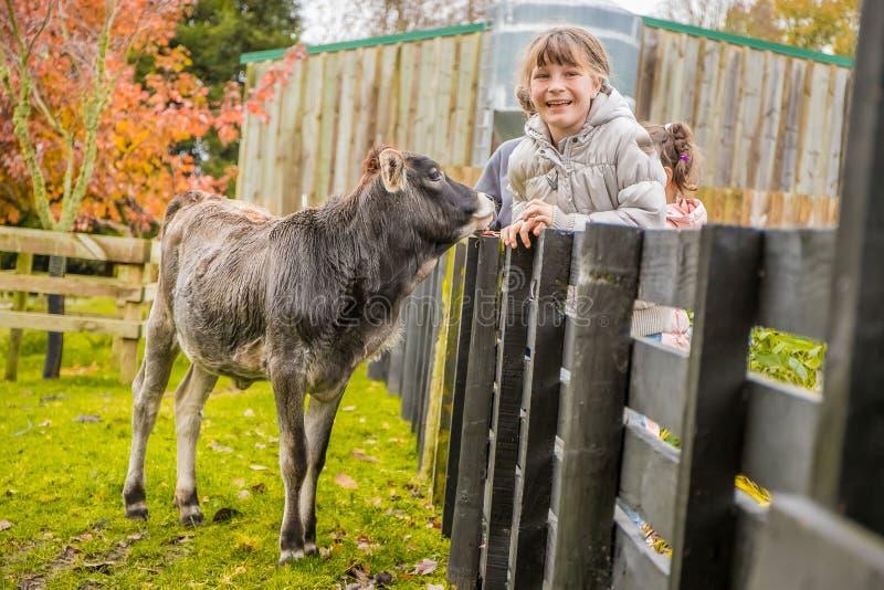 Eine Kuh auf einem Bauernhof lizenzfreie stockfotos
