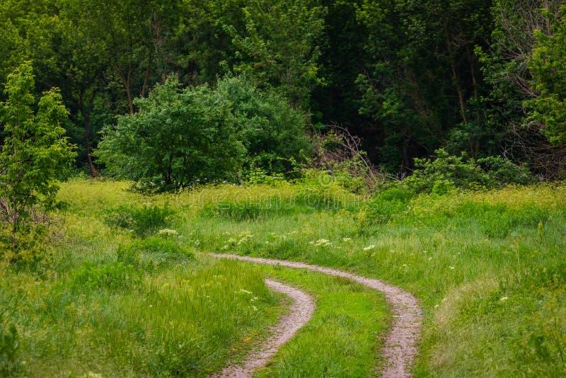 Eine Landstraße durch einen Wald lizenzfreie stockfotografie