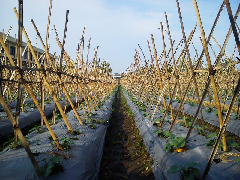 Eine Landwirtschaft lizenzfreie stockfotografie