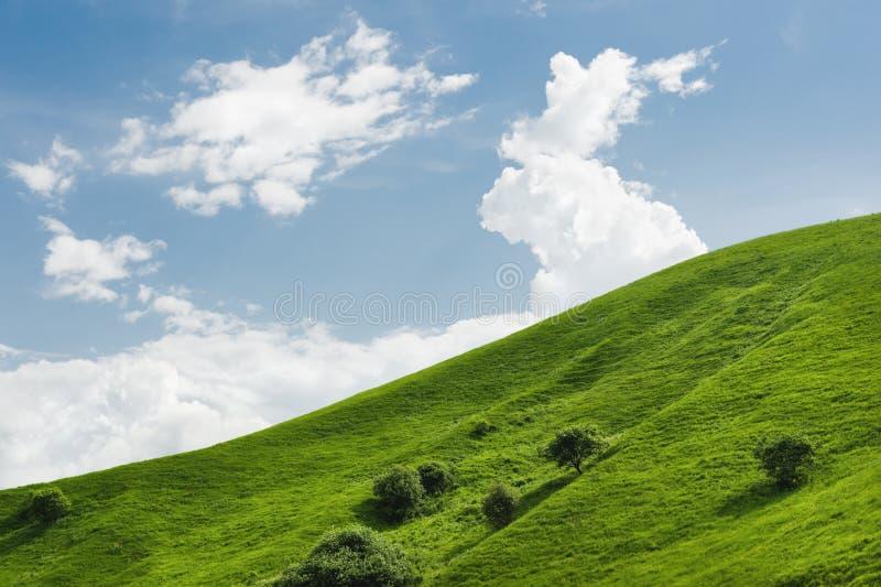 Eine leichte Steigung eines grünen Hügels mit seltenen Bäumen und des üppigen Grases gegen einen blauen Himmel mit Wolken Das Son lizenzfreie stockfotos