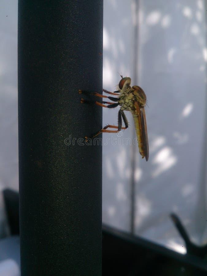 Eine Libelle lizenzfreies stockbild
