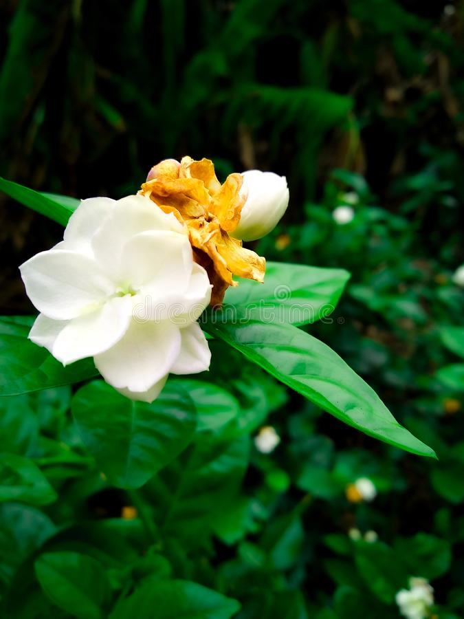 Eine Lilienblume lizenzfreies stockbild