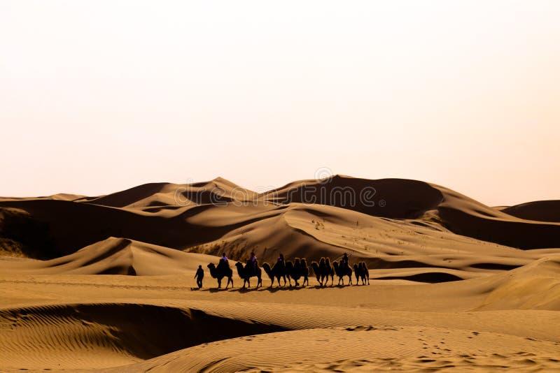 Eine Linie von Kamelen gehen in die Wüste lizenzfreie stockfotos