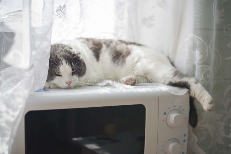 Eine müde lustige Katze liegt auf dem Bauch auf der Mikrowelle in der Küche lizenzfreie stockfotografie
