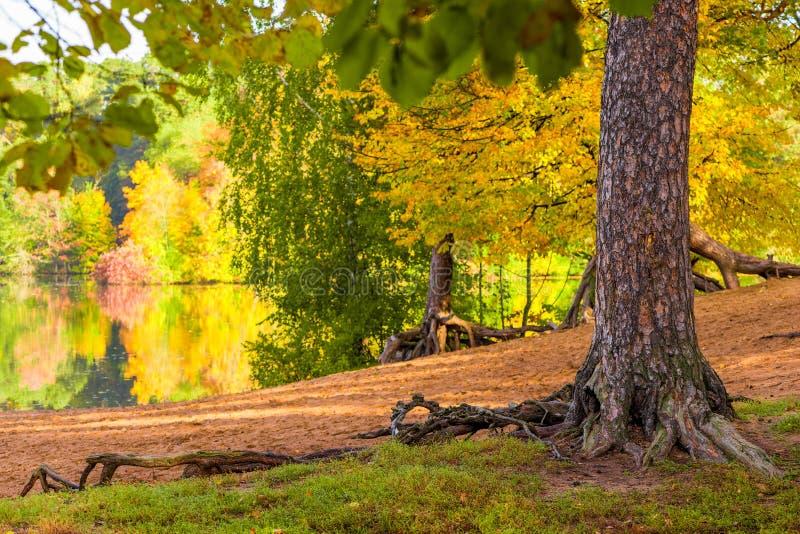 Eine malerische Herbstlandschaft im Stadtpark, eine Ansicht des L stockfotos