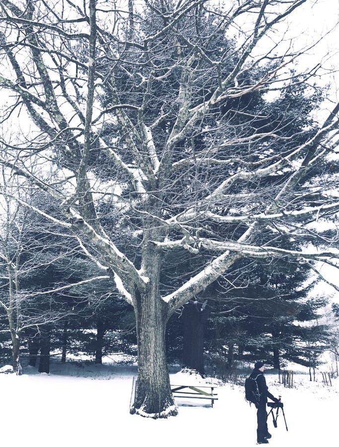 Eine Mannstellung unter einem großen Baum lizenzfreie stockfotos