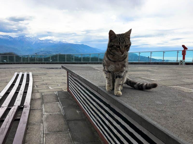 Eine mehrfarbige kleine Katze sitzt auf einem Sockel gegen Hintergrund eines hellen blauen gesättigten Himmels und der Berge lizenzfreies stockfoto