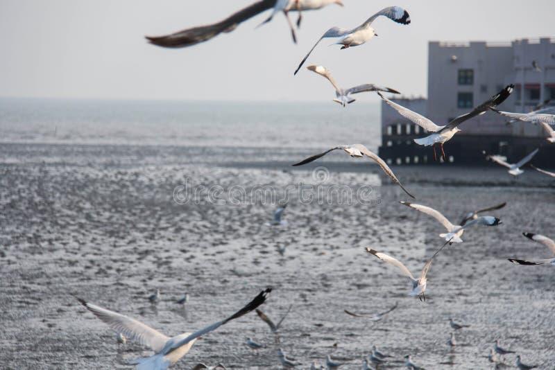 eine Menge des Vogels lizenzfreies stockbild