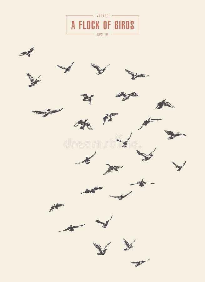 Eine Menge von den gezeichneten Vögeln vector Illustration, Skizze lizenzfreie abbildung