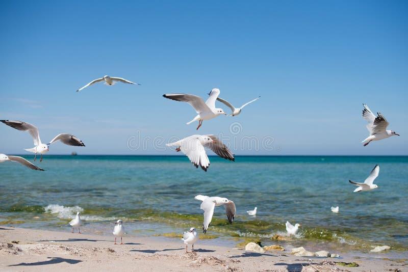 Eine Menge von den Seemöwen, die über die Küste an einem sonnigen Tag fliegen stockfotografie