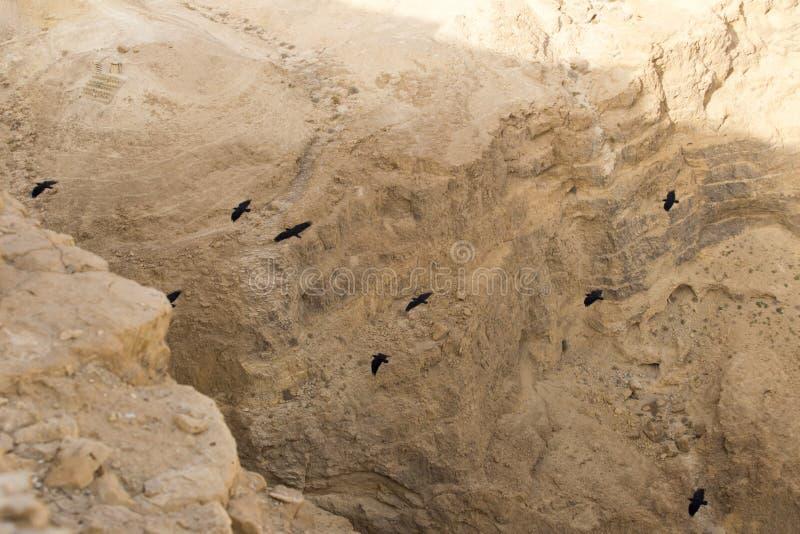 Eine Menge von großen schwarzen Raben, die ihre Flügel in einem tiefen verbreiteten stockbilder