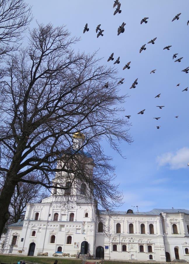 Eine Menge von Vögeln über dem Tempel lizenzfreie stockbilder